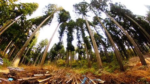 竹炭の香りで森林浴