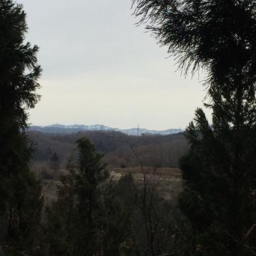 杉の間から多少東側景色が見える。朝焼け見れそう