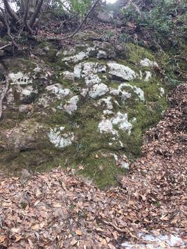 大きな岩苔むして抹茶の様