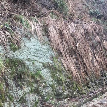 兜山でよく見かける緑色の岩盤。登山靴に色がつくくらい