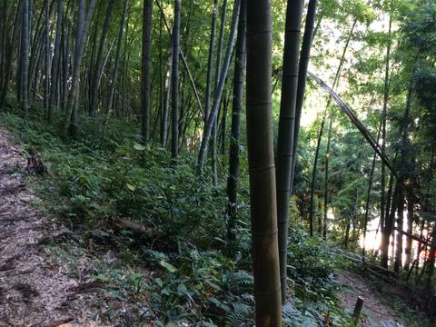 杉林から竹林へ