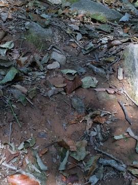 赤土は滑りやすいので注意