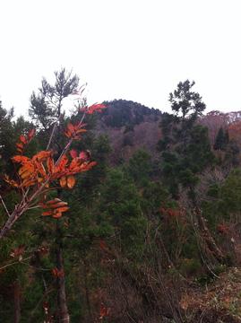 白虎谷から大嵐山
