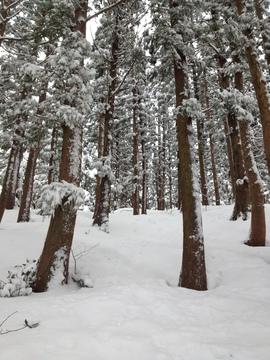 杉林から唐木峠方向へ