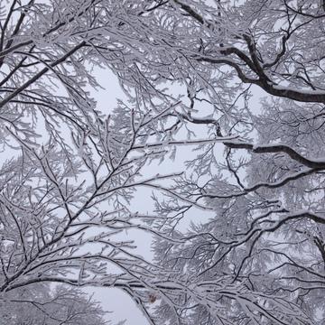 美しい樹氷