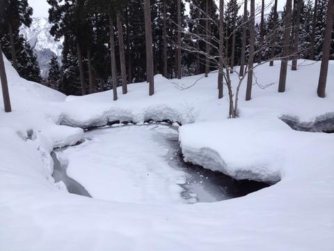 池も凍り付いている