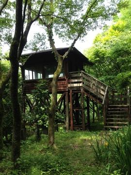 森の中の野鳥観察舎