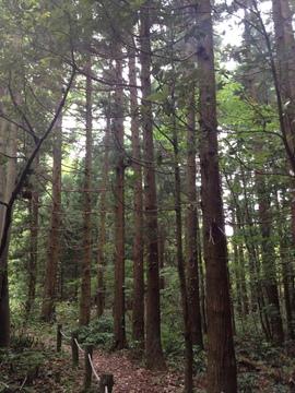 景色は一変して杉林