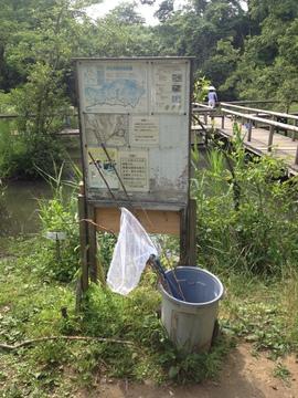 ザリガニ釣りの竿と糸は無料で借りれる。餌はサキイカ
