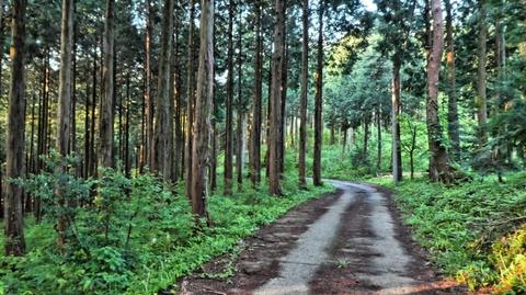杉林を抜けて登山口へ