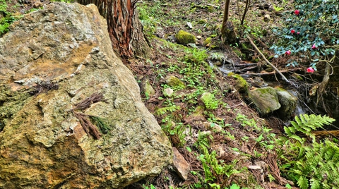 岩の大きさが大きくなってきた苔むしてるので注意
