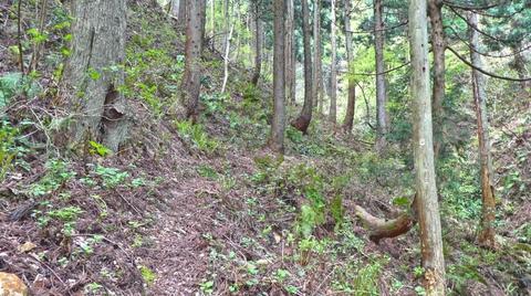 ここから谷を越えて向こうの尾根にうつる