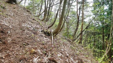 杉林を蛇行しながら登る。広いので道を見失わない様に