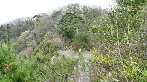 鍋谷和佐谷線林道が見えた