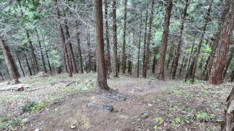 杉林へ降下。この下に鍋谷和佐谷線が