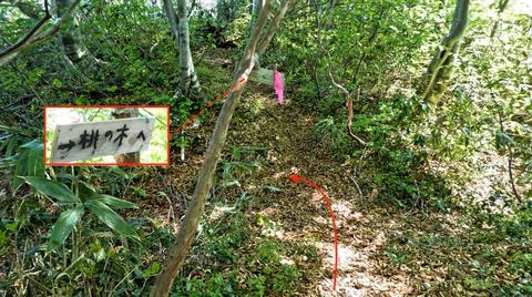 順尾から少し進むと桃の木道への分岐がある。ここ左
