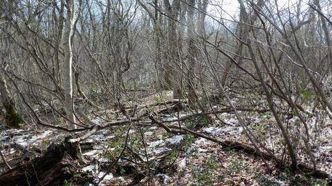 尾根に出たら道はフリー、でもどこに行ってもツリー