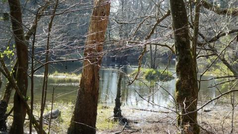 道の横の沼。名園風のレイアウト