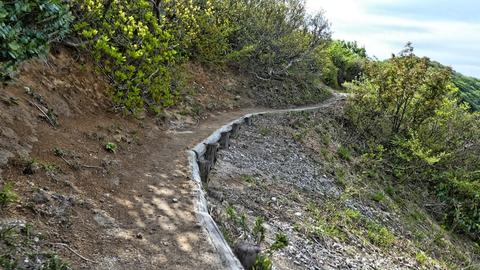 木材で補強されている歩きやすい道