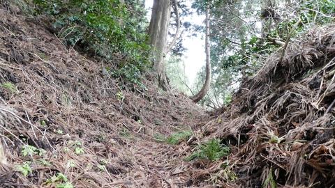 杉の枝でふかふかの登山道