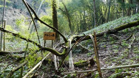 クルミの森の看板
