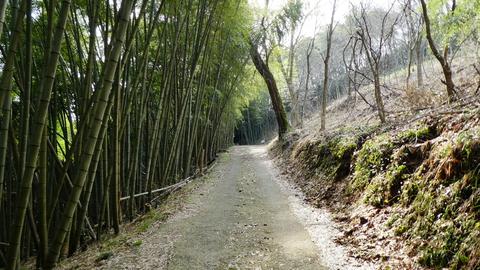 気持ちのいい竹林を進む。ここは地図に出てる道