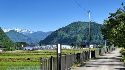 田園風景を釜清水へ南下。左奥に白山が見え始める。一番手前のコブは岳峰、左の三角が笠山でその右が高倉山