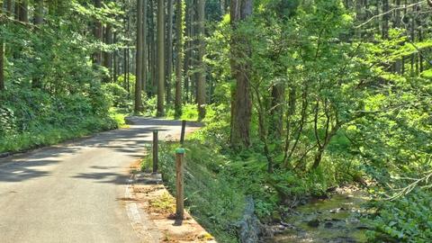 大谷の杉林。渓流が流れる