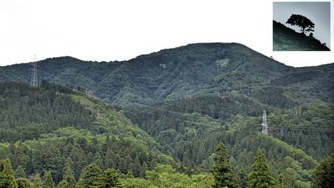 右に見えるのは火燈山、気になる突起は樹木だった