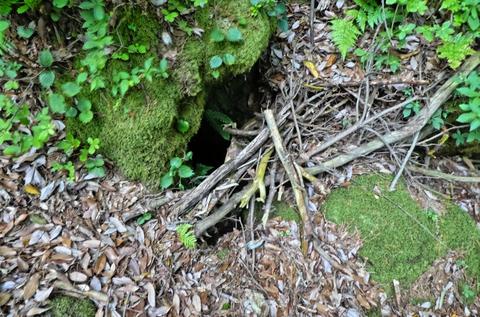 木でふたをしてある穴。下はマセ山洞窟南側 青龍洞の上辺りと思われる