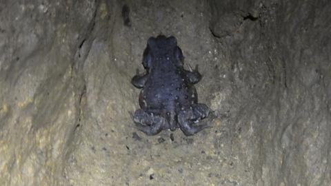第一カエルも発見