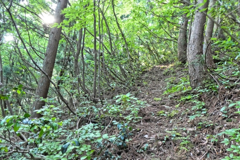 はっきりとした登山道を100メートル位登る