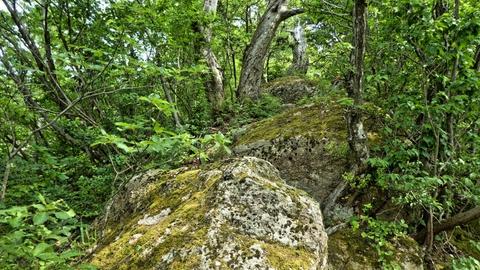 適度な傾斜の岩の上を3点支持でぐいぐい登るアスレチック
