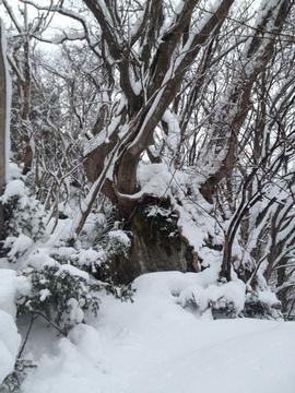 名物の岩からまり木