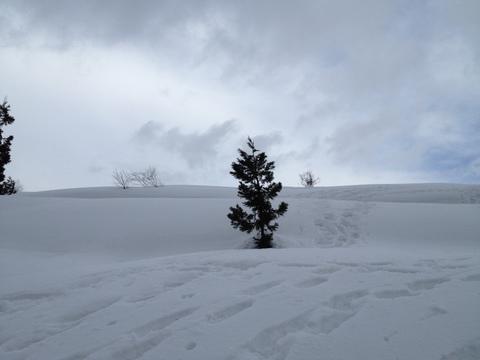 歩きやすい雪原