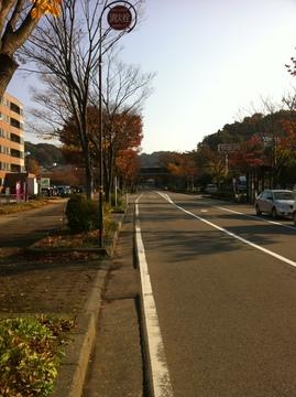 金沢大学横の並木