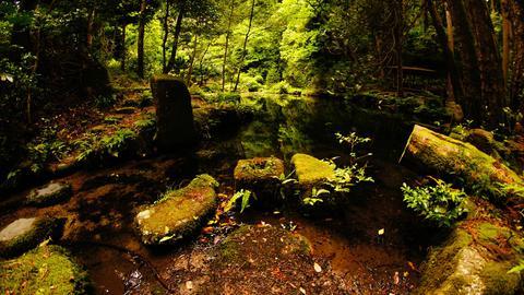 赤蔵山御手洗池