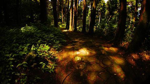 木漏れ日が美しい石畳の道