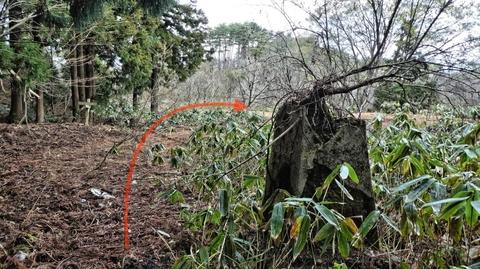 木が生えた謎の石と標識。大池は目の前