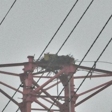 福井火力線5番 第2福井火力線5番 鳥の巣付き