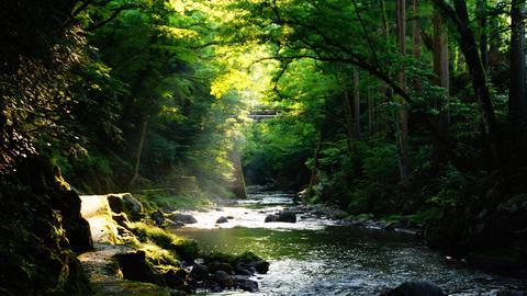 池田町ふれあい遊歩道ぞいの足羽川渓流