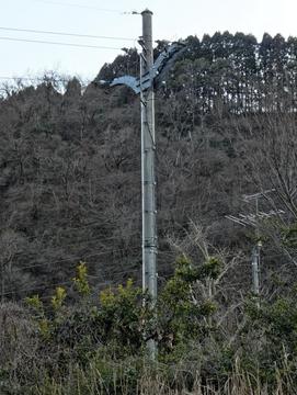 石川では珍しいモノポールに接続