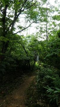 新敦賀変電所南側への巡視路