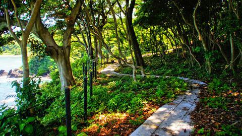 やぶ椿の原生林の分布率は日本一