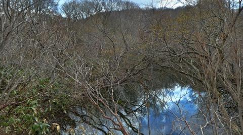 林の中の「さしおの池」空がが映り込んで綺麗