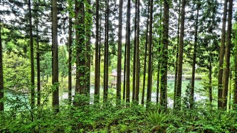 林の向こうにスゲ池