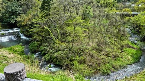 渓流はさきほどの子撫川ダムに通じる