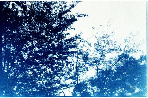 作例:適当に撮った木