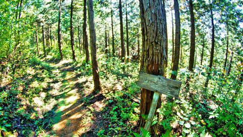 斜度は緩くなり再び杉林