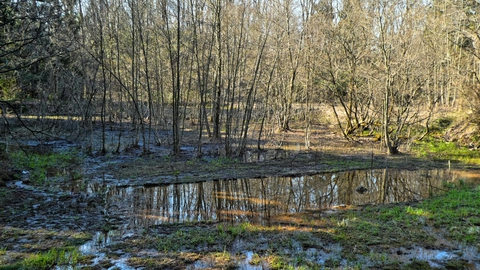 途中の池。北欧風